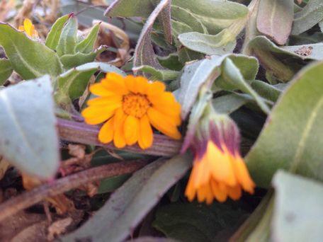 20140217flower3.jpg