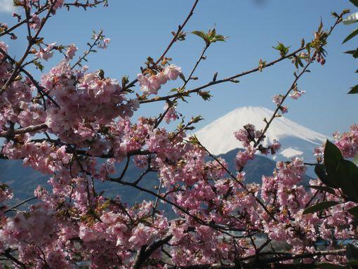20140311sakura4.jpg