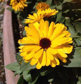 20140321flower2.jpg