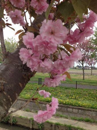 20140422flower4.jpg