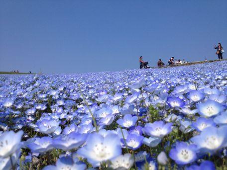 20140425flower.jpg
