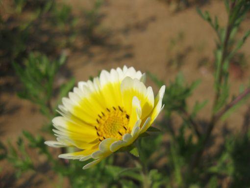 20140425flower3.jpg