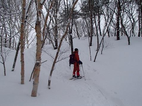 樹林を歩く