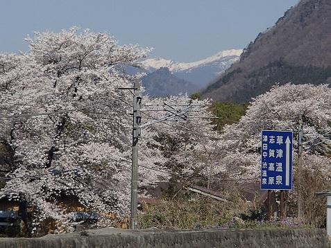 R353の桜