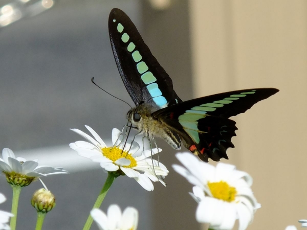 花と蝶2-2〔フリー写真〕