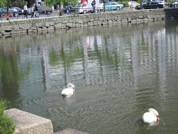 白鳥5〔フリー写真〕