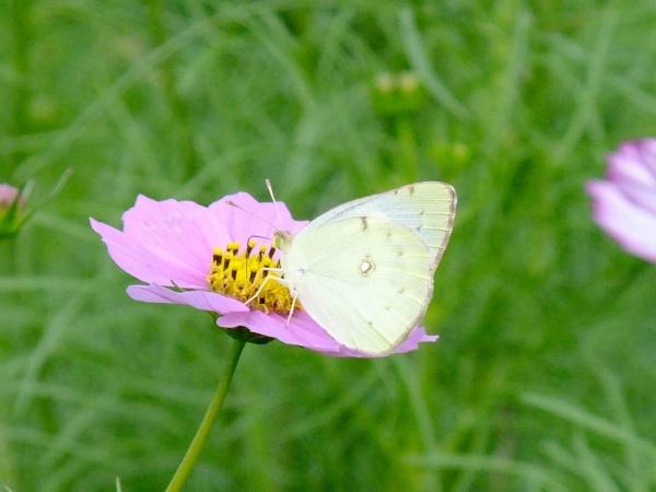 花と蝶3-2〔フリー写真〕