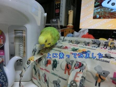 せいちゃん弁当箱2