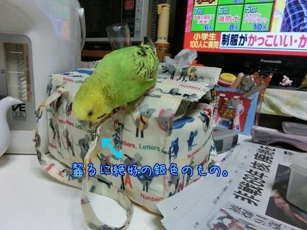 せいちゃん弁当箱4