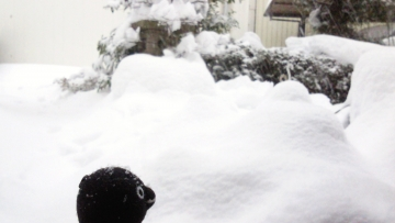 20140208-雪景色 (2)