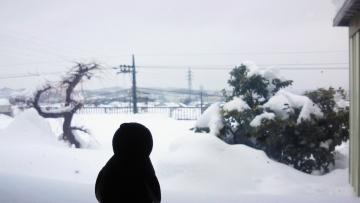 20140215-大雪 (13)
