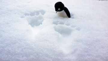 20140215-大雪 (8)-加工