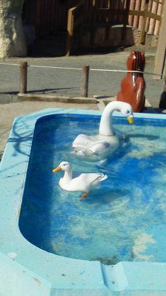 20140430-円山動物園