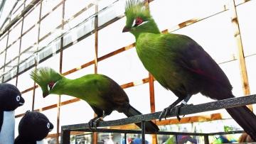 20140523-花鳥園 (67)-加工