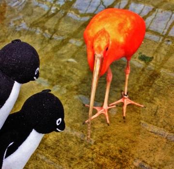 20140523-花鳥園 (62)-加工