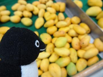 20140617-スーパーマーケットにて (10)マンゴ