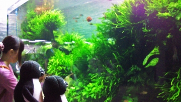20140705-すみだ水族館 (2)-加工