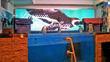 20140713-ペンギンのいる Bar (3)-加工