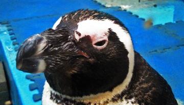 20140713-ペンギンのいる Bar (17)-加工