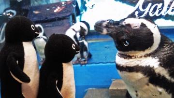 20140713-ペンギンのいる Bar (16)-加工