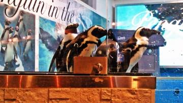 20140713-ペンギンのいる Bar (28)-加工