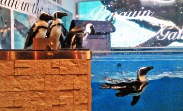 20140713-ペンギンのいる Bar (27)-加工