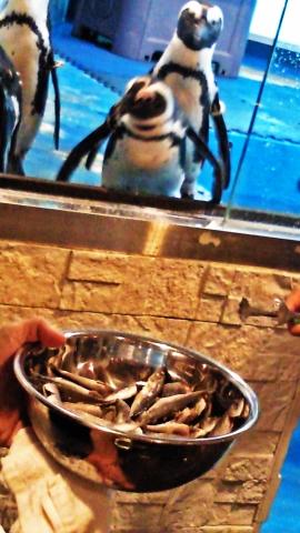20140713-ペンギンのいる Bar (30)-加工