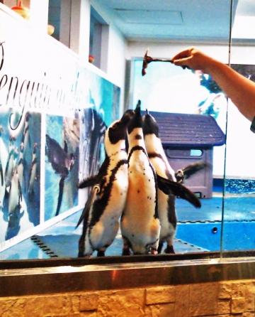 20140713-ペンギンのいる Bar (32)-加工