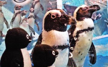 20140713-ペンギンのいる Bar (35)-加工