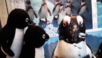 20140713-ペンギンのいる Bar (41)-加工