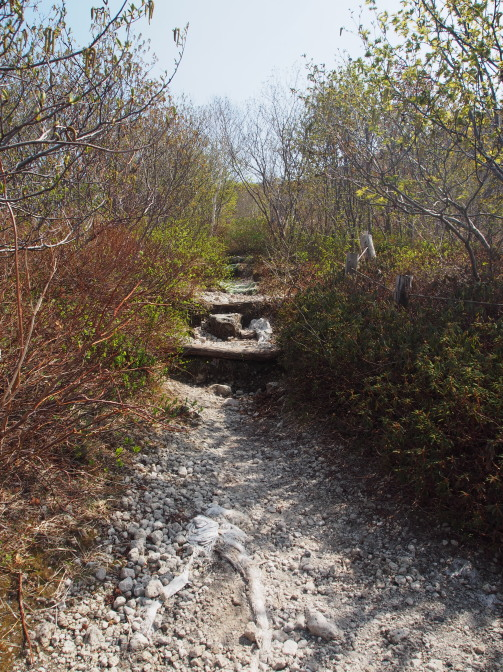 樽前山7合目付近の登山道