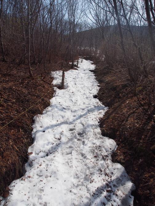 一部雪で覆われた登山道