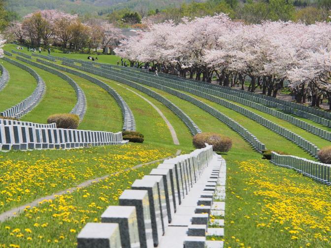 整然と並ぶ墓石と桜