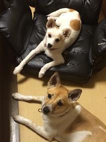 ココア&らぶ④