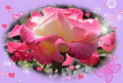 薔薇ピンク2