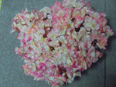 子ども色の桜