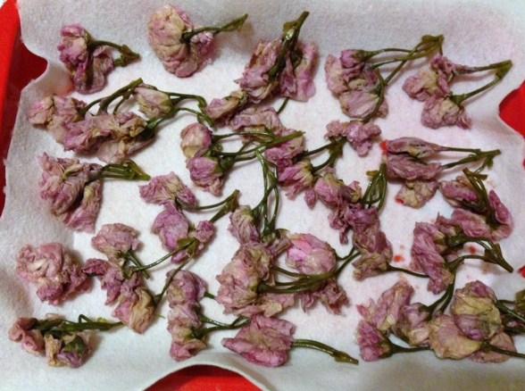 桜塩漬け2