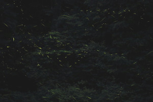 Img_1146