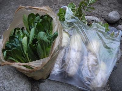 20140319自家栽培野菜