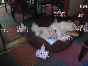 blog2054.jpg