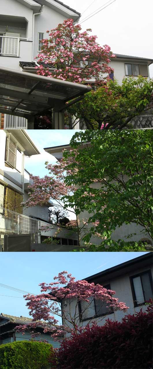 mizuki4430.jpg