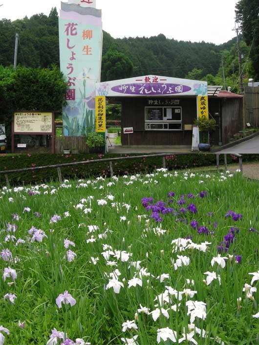 syoubu4612.jpg