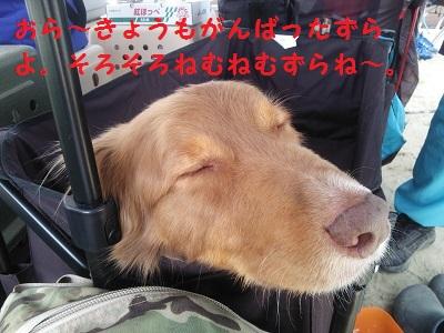 吠え疲れですか?