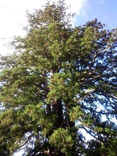 20131028大杉(その3)