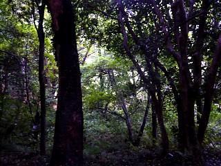 20130908福浦島(その25)