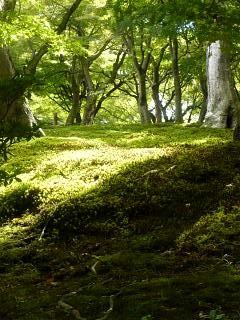 20131017東福寺(その42)