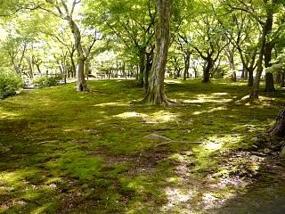 20131017東福寺(その43)