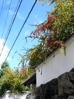 20131017東福寺(その58)