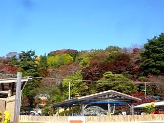 20131109二本松菊人形祭り(その17)