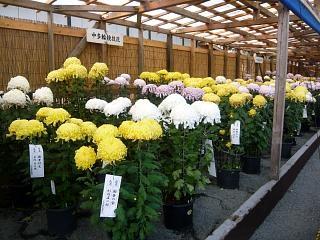 20131109二本松菊人形祭り(その21)